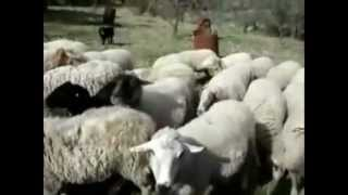 Yo Quiero Ser Oveja - 4 Pas B