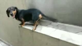 ¿ Callejón sin salida ? No hay problema, se pone la marcha atrás y sale sin problemasMas vídeos en ► http://www.yonkis.com