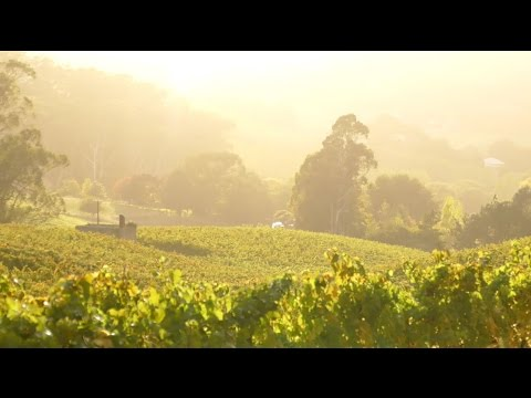 Bendbrook Wines from the Adelaide Hills, South Australia | Wine & Country