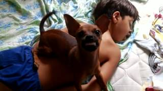 Acordando o Filho mais o Cachorro não deixa