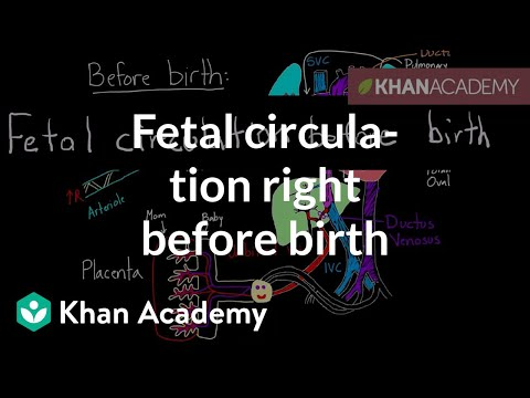 Fetal Circulation Right Before Birth Video Khan Academy