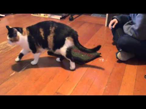 bengal cat fur texture