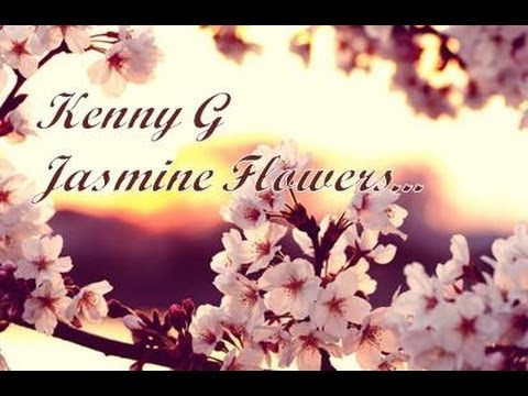 Kenny G Jasmine Flower