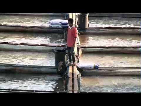 WATCH: Fishing without a net… Fish farms and the 2011 floods