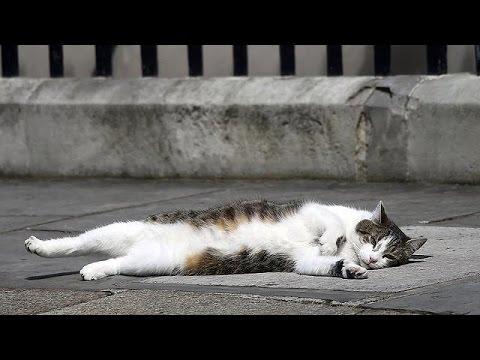 Ντάουνινγκ Στριτ: Ο Κάμερον έφυγε-Ο Λάρι ο γάτος παραμένει