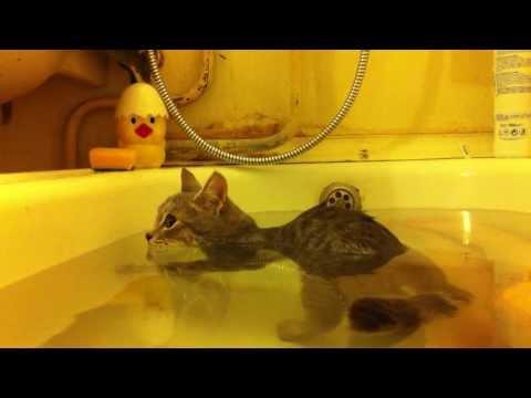 當貓咪碰到水時通常浴室現場都會很狼狽,但是這隻喵星人在浴缸裡的反應讓大家都融化成一攤水了!