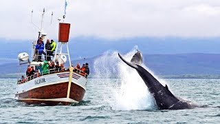 Husavik Iceland  city images : Whale Watching Húsavík Iceland - Walbeobachtung Island