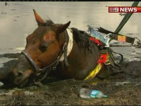 quicksand mud - A horse is dramatically rescued from a beach in Australia. The animal's owner stayed by its side as the tide came in. Report by Sam Homewood. Like us on Face...