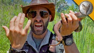SNAKE BITE...is it Venomous?! by Brave Wilderness
