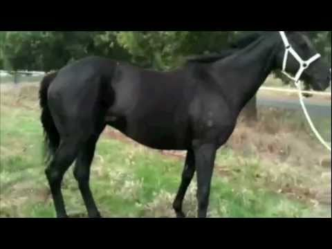 Video of horse affected by Flavivirus