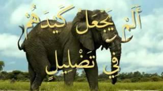 القرآن المعلم بصوت المنشاوي  سورة  الفيل