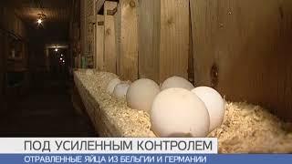 Роспотребнадор: В Петербург не поставлялись европейские куриные яйца с фипронилом