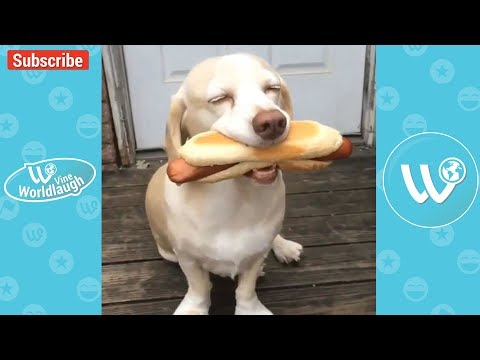 Funny animals - TRY NOT TO LAUGH Funny Pets & Animals Video Compilation 2018 Vine Worldlaugh