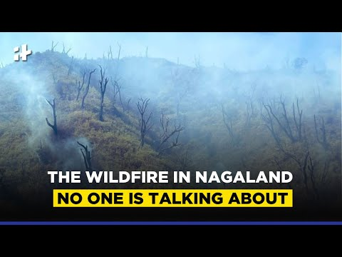 Dzukou Valley Wildfire: The Wildfire In Nagaland No One Is Talking About