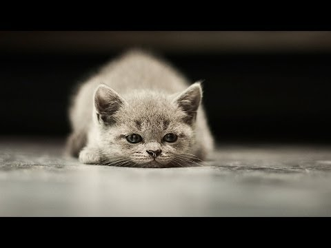 How to Make Sure Your Cat Isn't Bored | Cat Care