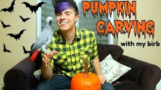 Pumpking Carving w/ Gypsy the African Grey! *spoopy birb halloween special* by Tyler Rugge