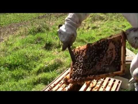 How to examine your bees in late spring!