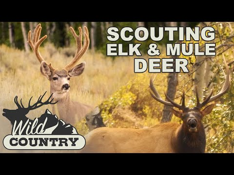 Elk and Mule Deer Scouting Tactics - Wild Country
