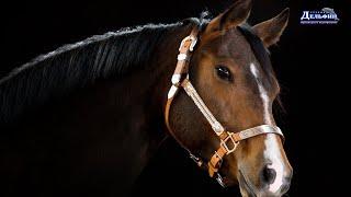 ВИДЕО - Про лошадок