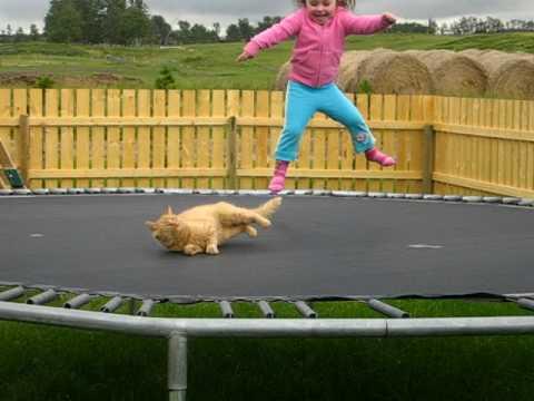 La bambina e il gatto sulla trampolina
