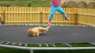 Download Lagu Trampoline Kitty Mp3
