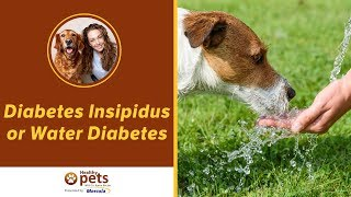 Dr. Becker Discusses Diabetes Insipidus or Water Diabetes