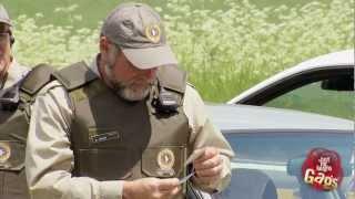 Police Border Patrol Pigeon Prank