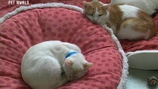 Steve Dale: Hyperthyroidism In Cats
