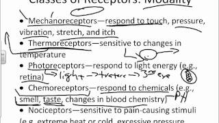 Overview And Classification Of Sensory Receptors.wmv