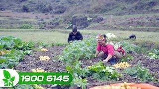 Nông nghiệp |