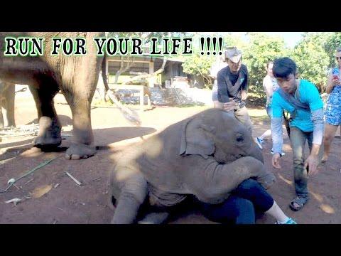 Baby elephant attacks woman