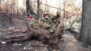 Video Sambar Deer Bow Hunting MP3, 3GP, MP4, WEBM, AVI, FLV Juni 2017