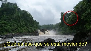 Video En esta Isla Encontraron Dinosaurios Vivos (Captados en imágenes) MP3, 3GP, MP4, WEBM, AVI, FLV Agustus 2017