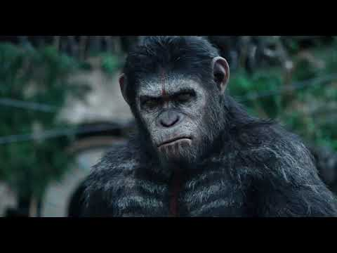 Apes Don't Want War - Extrait Apes Don't Want War (Anglais)