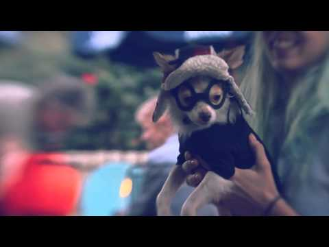 Chihuahua in a Hipster Boyfriend Costume   The Daily Puppy