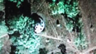 Google Earth! Самые загадочные обьекты на земле