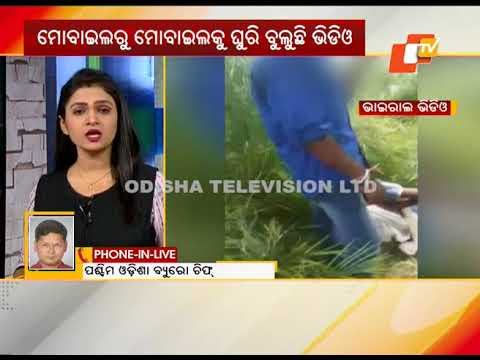 Video Video shows college girl student being harassed in Bolangir download in MP3, 3GP, MP4, WEBM, AVI, FLV January 2017