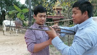 Takeo Cambodia  city photos : Dove Trap at Takeo Province in Cambodia