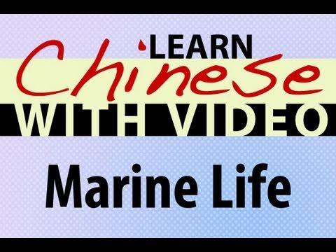 Die See - Chinesisch Vokabeln