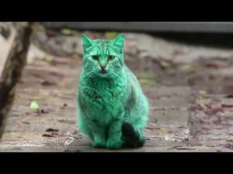 Feline a little green! Meet the GREEN cat of Bulgaria - The people of Varna, Bulgaria have no idea how to react to an emerald green cat lurking around the streets.  |  An emerald green cat that has been lurking around the Black Sea resort of Varna, Bulgaria has people both confused and enraged.  Is it photoshopped? An act of animal cruelty by local hooligans? An alien life form?  According to the latest reports, none of the above.  It was recently discovered that the cat has been sleeping in an abandoned heap of synthetic green paint, and each day the color is getting darker.  Great - now will someone in Bulgaria please adopt this poor creature before it has to spend another night in that pile of ooze?