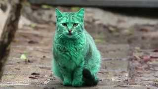 Meet The Mysterious GREEN Cat Of Bulgaria