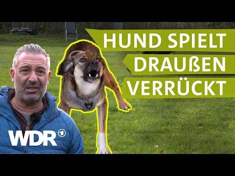 Hunde spüren Stress der Halter | Hunde verstehen (6)  ...