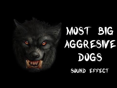 Most Big Aggressive Dogs Bark & Growl - True Recording Sound Effects HQ