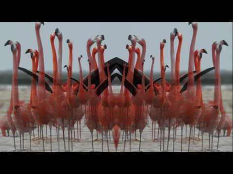 Birds Do It (Lyric Video)