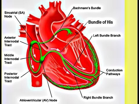 Atrial Fibrillation – Clinical Perspective