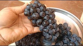 Video పిల్లలు చదువుల్లో ముందుండాలంటే నల్ల ద్రాక్ష తో ఇలా చేయండి | Amazing Uses of Black grapes MP3, 3GP, MP4, WEBM, AVI, FLV September 2018