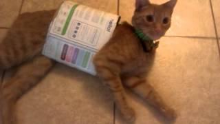 Crazy Cat vs A Box