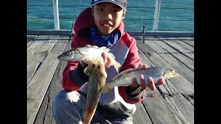 Corinella Australia  city photos : Basic Jetty Fishing | Mixed Bag