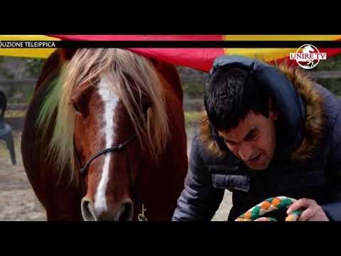 Il miglioramento genetico del cavallo agricolo