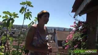 #1319 Wie oft giesse ich Tomaten im Topf auf Terrasse und Balkon - mit Sabine Reber